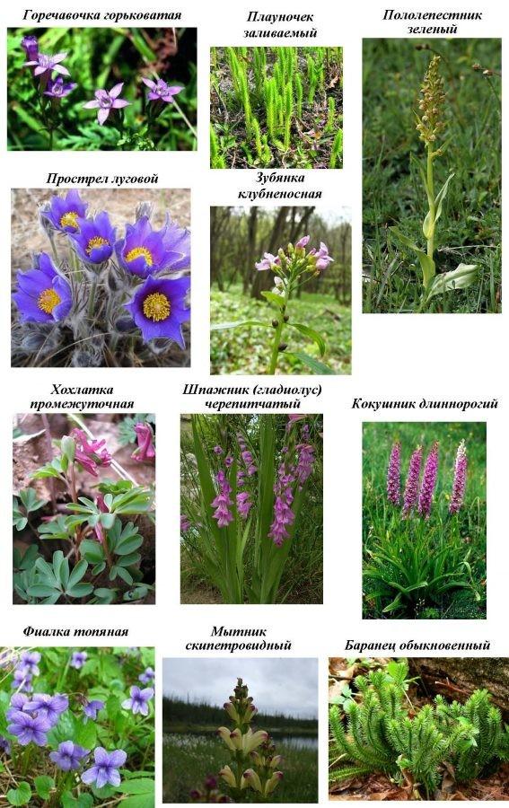 Сохраним редкие и исчезающие растения Бобруйщины