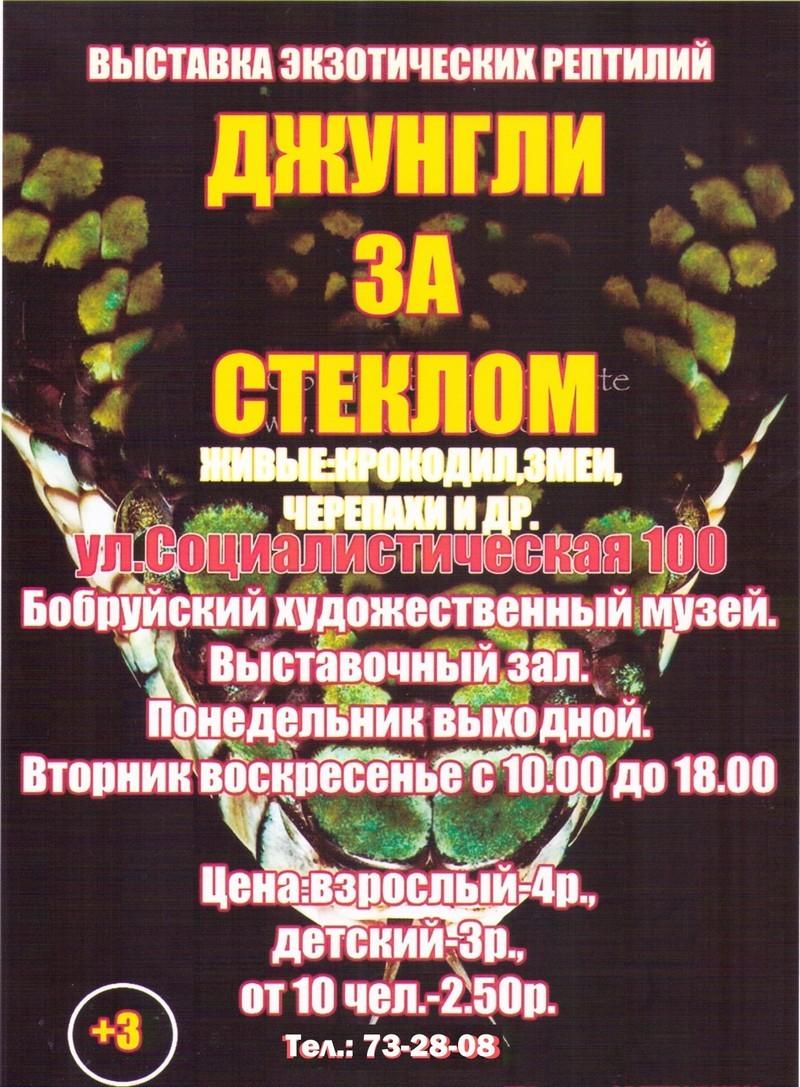 В выставочном зале Бобруйска работает выставка «Джунгли за стеклом»