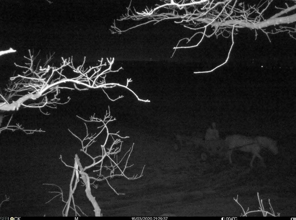 как бобруйский лесхоз с помощью фотоловушки поймал вора в лесу
