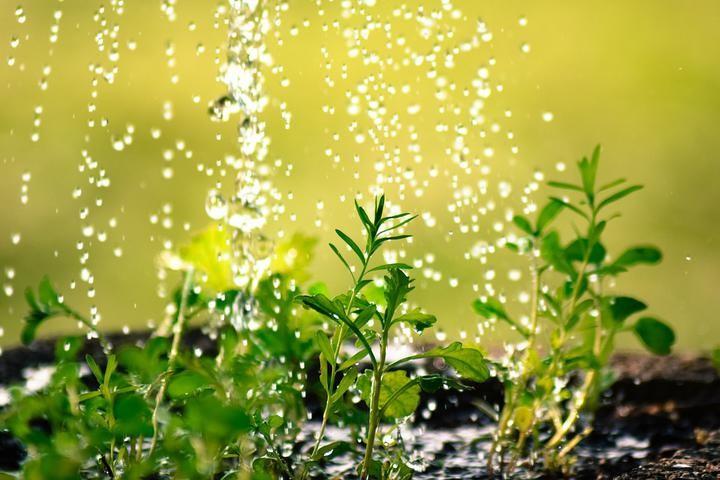 Спанбонд не единственная панацея. Способы защиты растений от заморозков, которые работают