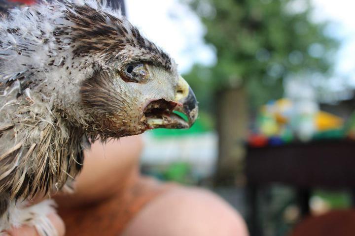 «Просто не хватает еды». Птичий приют под Осиповичами просит помощи
