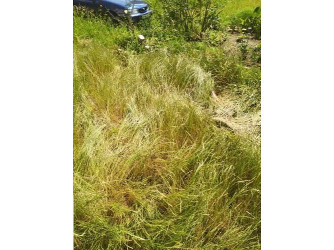Почему в некоторых районах Бобруйска не косят траву? Отвечаем на вопрос