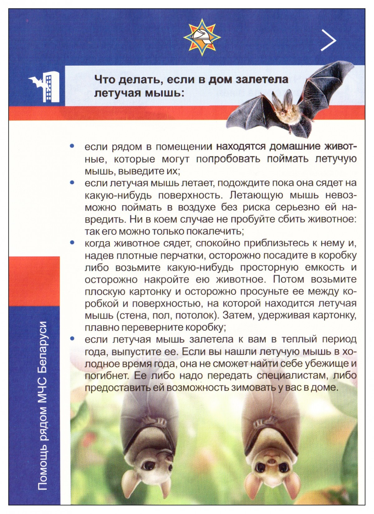 Ловили с помощью МЧС: летучая мышь в квартире бобруйчанки