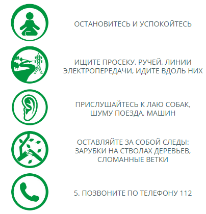 Советы МЧС: что делать, если заблудились в лесу