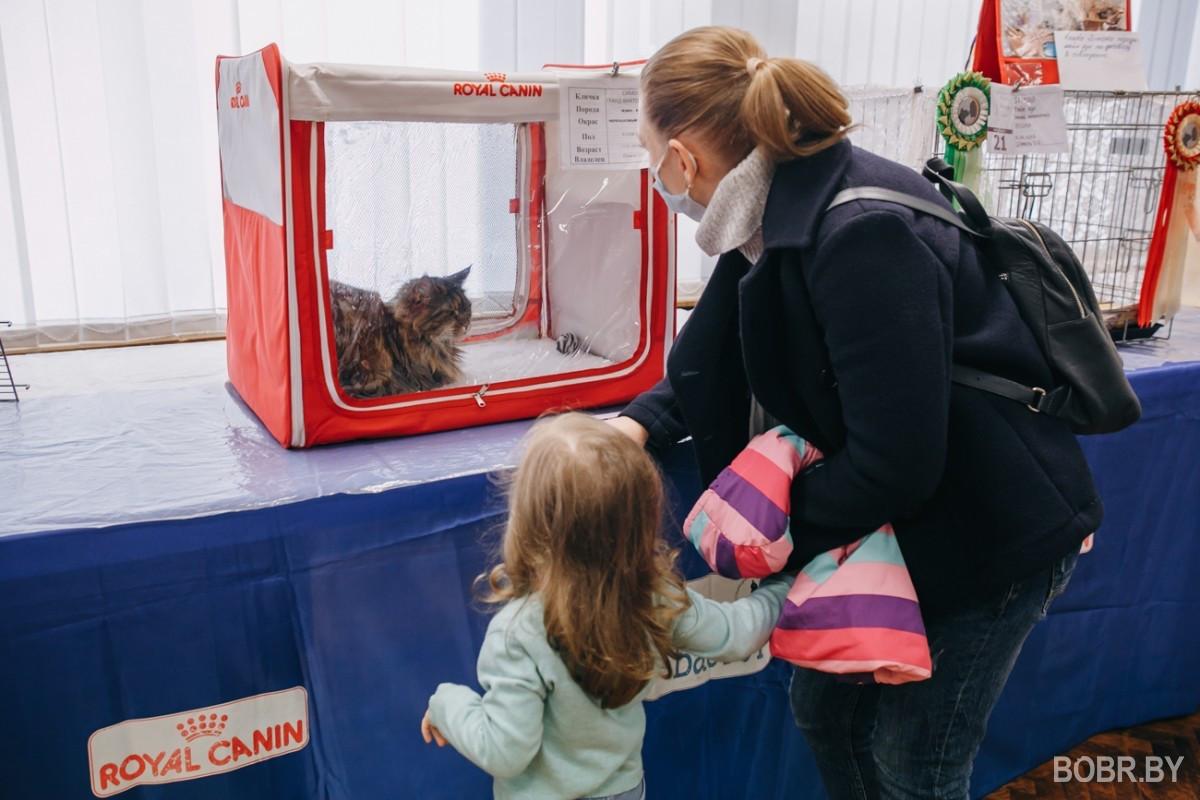 В бобруйском художественном музее прошла выставка кошек. Фоторепортаж