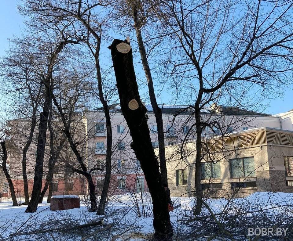 На улице Совецкой 95 срезают деревья. Почему?