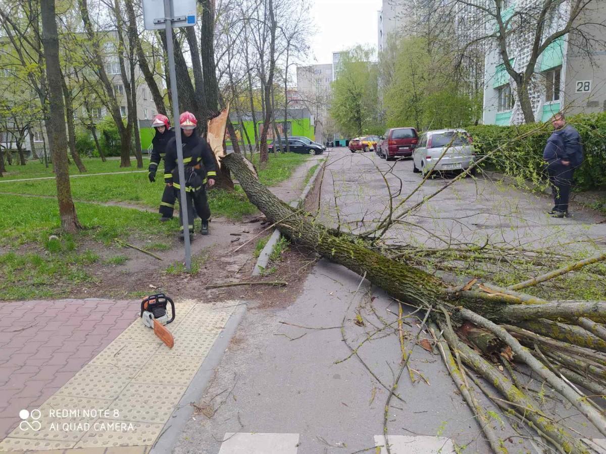 В «Белэнерго» рассказали, сколько населенных пунктов из-за сильного ветра остались без электроснабжения