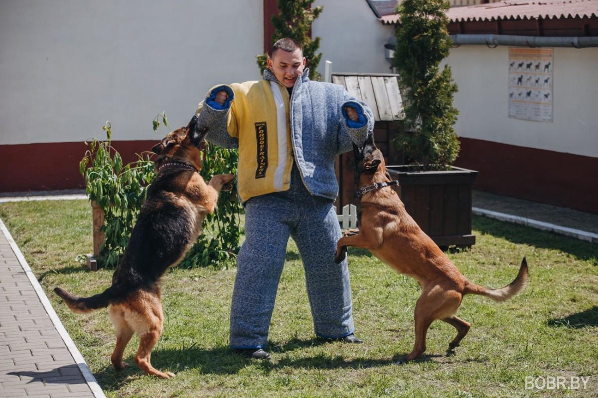 """""""Чем больше узнаю людей, тем больше нравятся собаки"""". Каково это - работать кинологом в милиции?"""