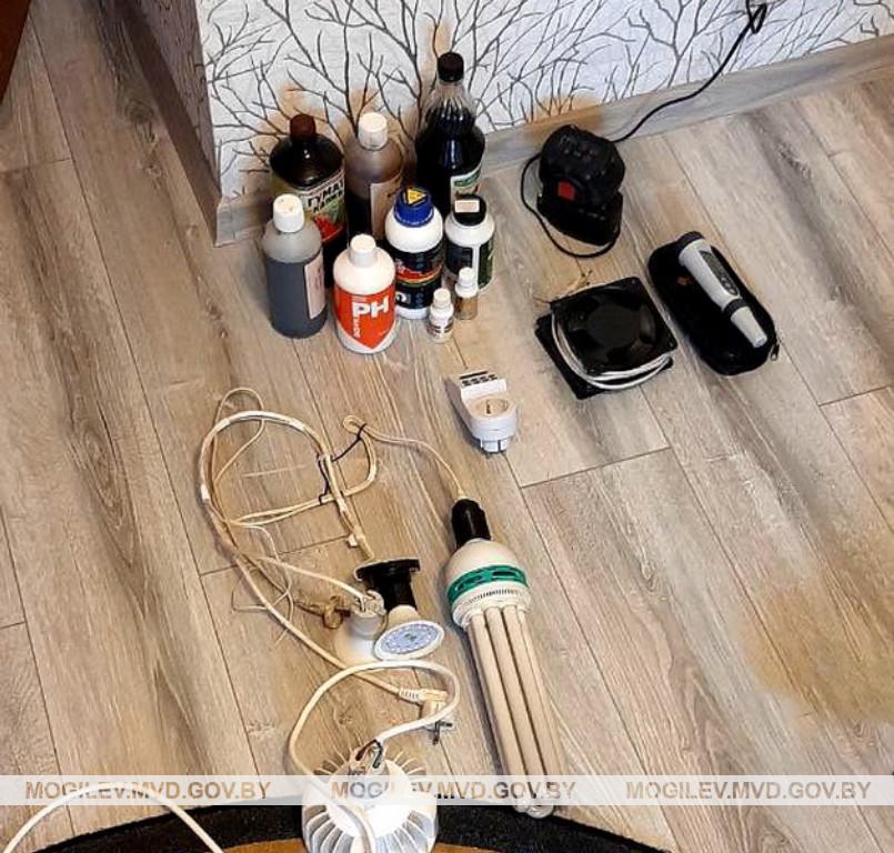 Бобруйчанин выращивал коноплю в квартире