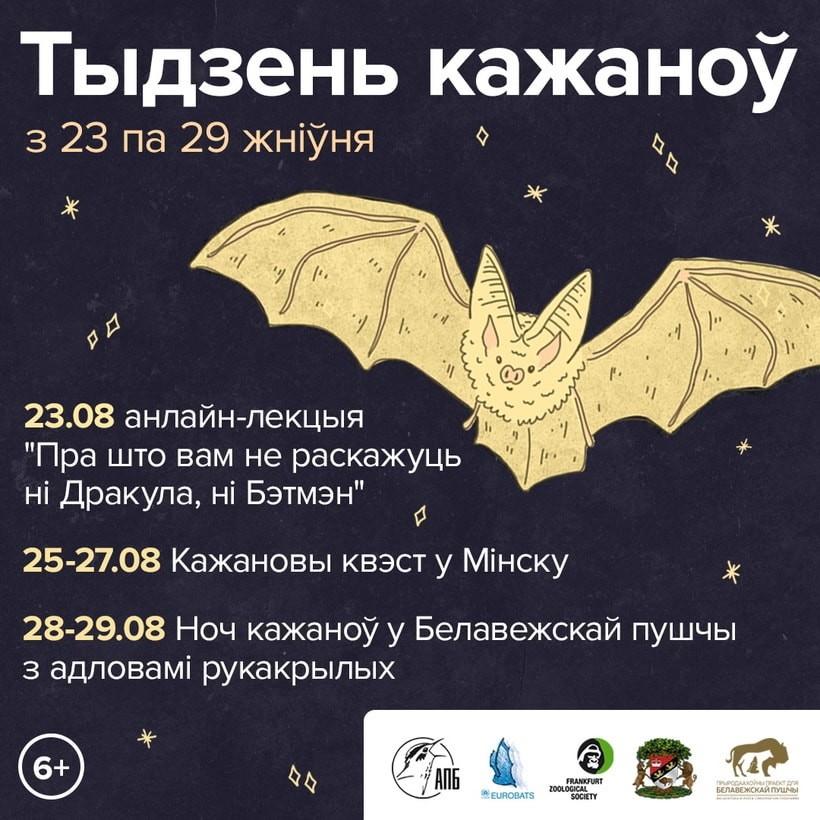 Белорусам предлагают разобраться с летучими мышами. Будут искать, ловить, знакомиться