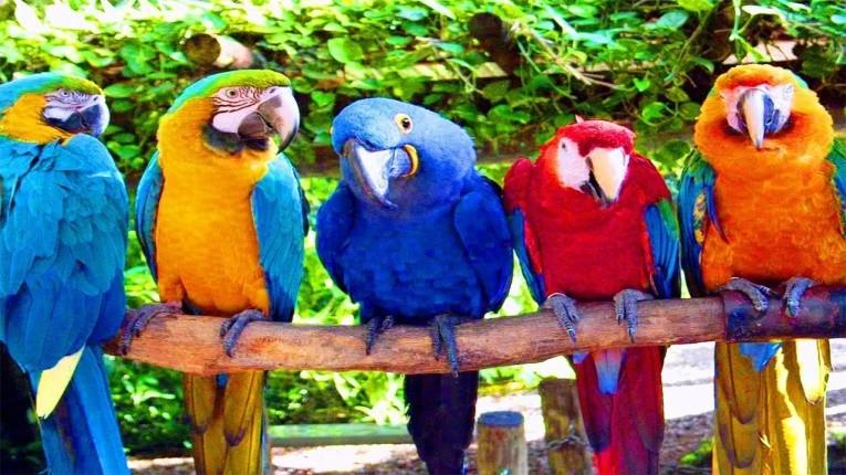 В Бобруйске проходит выставка экзотических попугаев